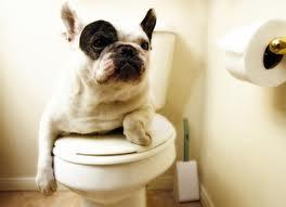 Psí toaleta
